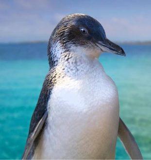 Penguin Island Boardwalk Trail - Perth