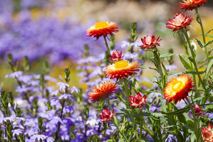 Visit the Auburn Botanic Gardens