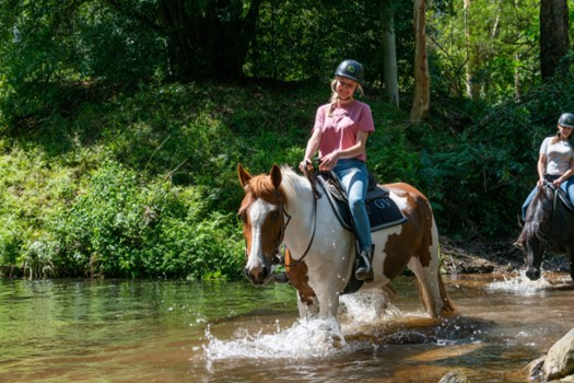 Horseback Riding Through Nature