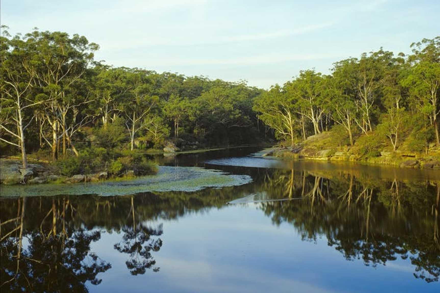 Have a Dip in Lake Parramatta Reserve