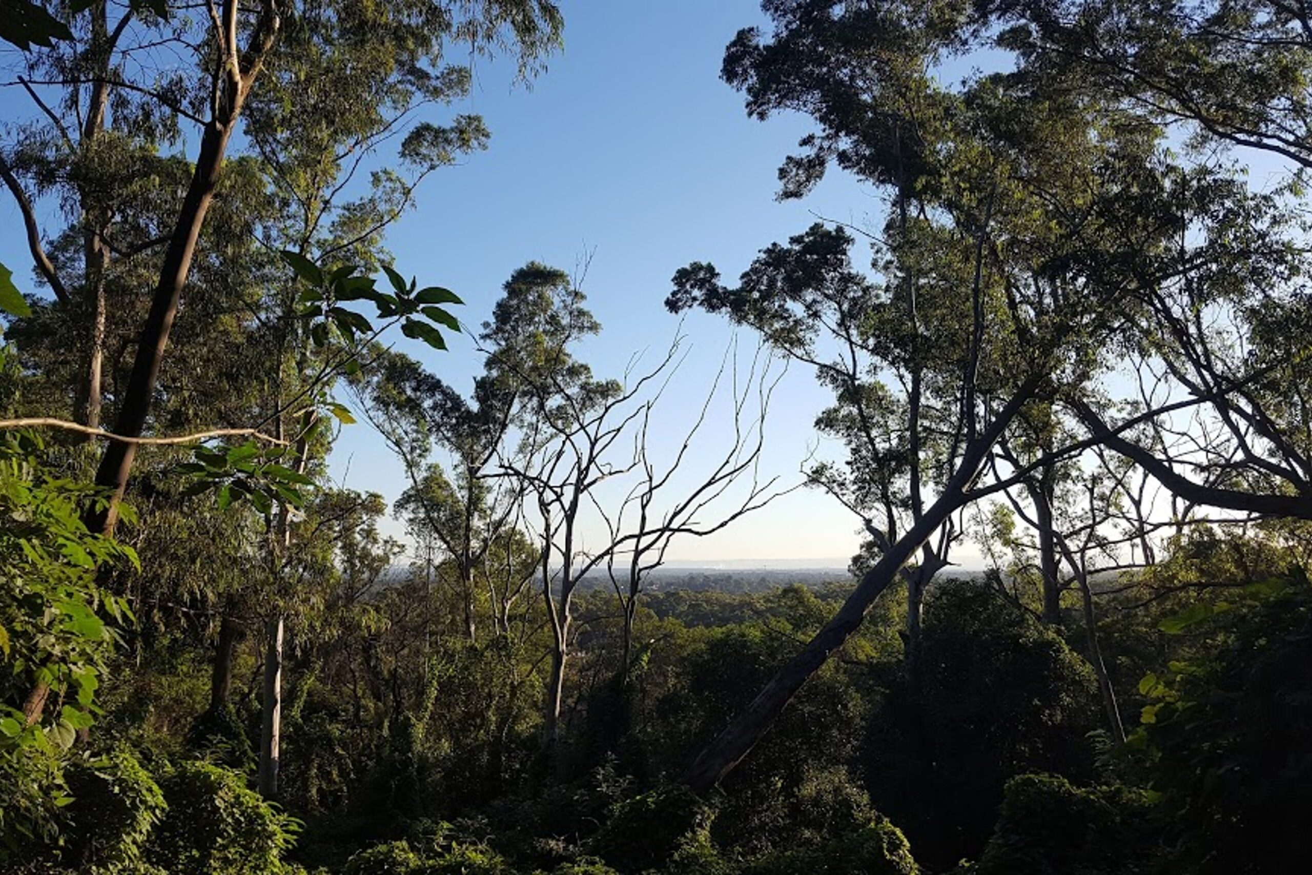 Enjoy Sunset Views at Mt Wilberforce Lookout