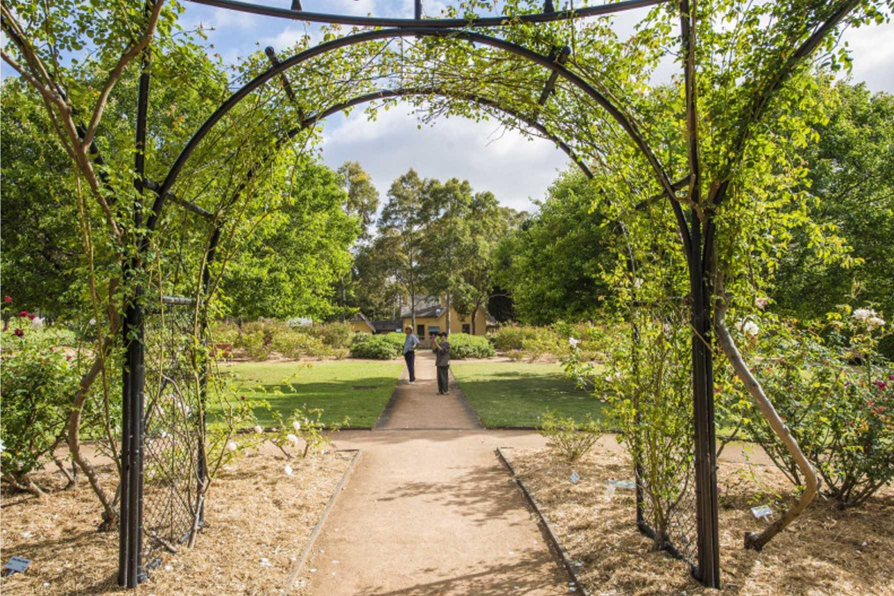 Stroll Through Rumsey Rose Garden