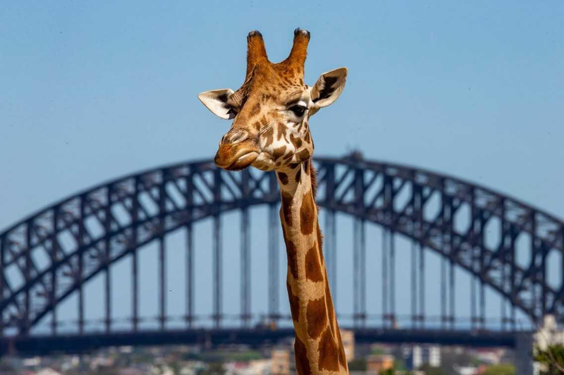 Adult's Excursion to Taronga Zoo
